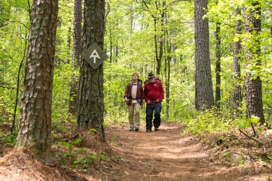 'Un paseo por el bosque', crítica