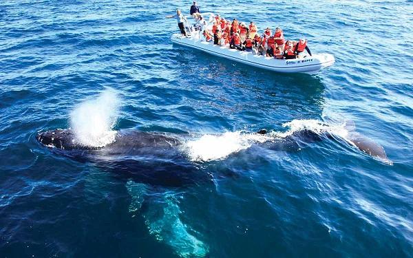 observacion de ballenas en puerto vallarta