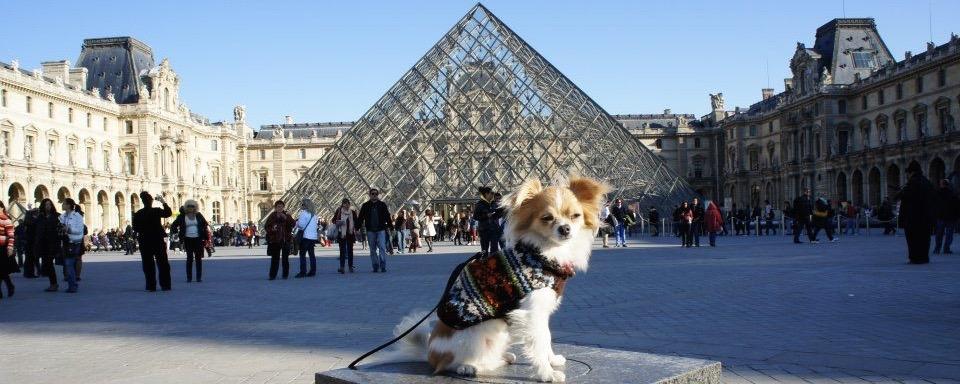 Viaja con tu mascota a uno de los barrios más populares de París